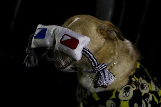cães-cinema-