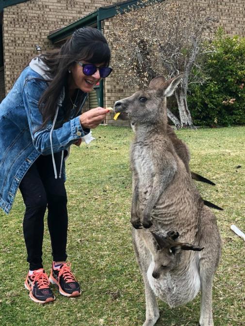 austrália - cangurus