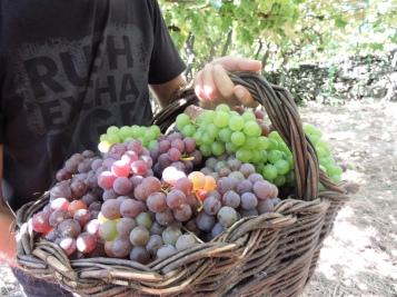 Bennato - colher uvas