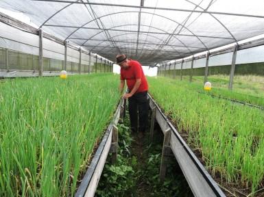 Fazenda da Cria (6)